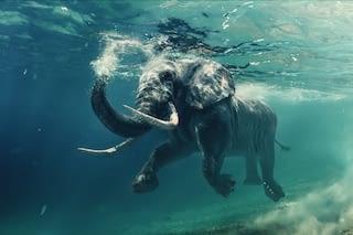Elefant unter Wasser